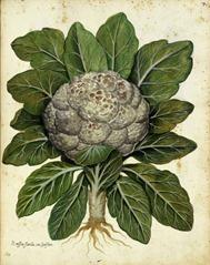 000_cauliflower